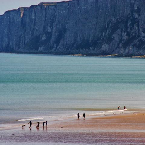 Bempton Cliffs from Reighton Gap - Ian Nisbet