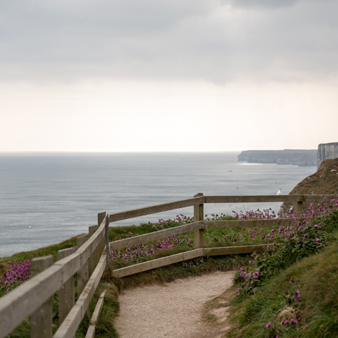 RSPB Bempton Cliffs, great for seabird watching - Sadie Ferriday