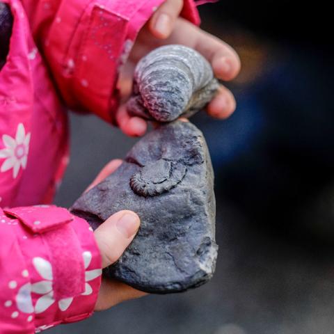 Boggle Hole fossil hunting with Hidden Horizons - Tony Bartholomew